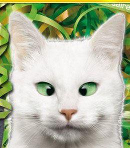 chat feu vert ramsès