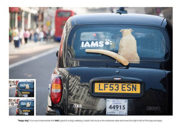 iams street marketing