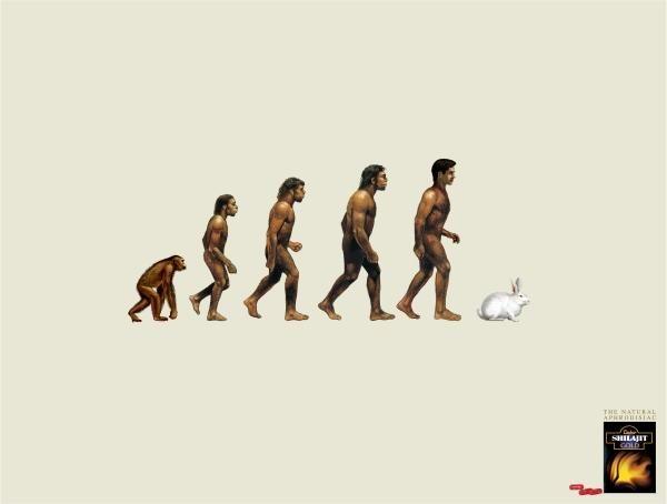 pub evolution Health Tonic