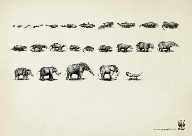 pub evolution WWF