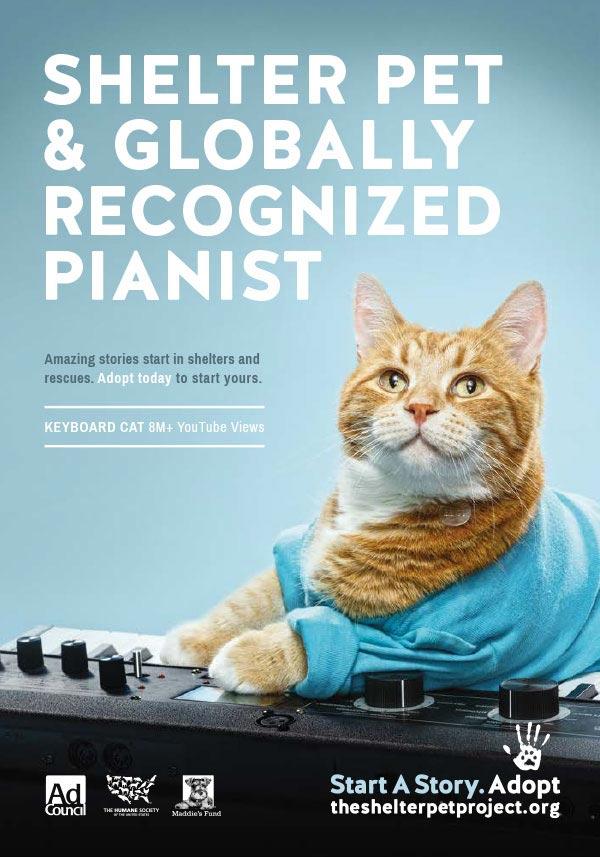 publicité mème keyboard cat theshelterpetproject.org