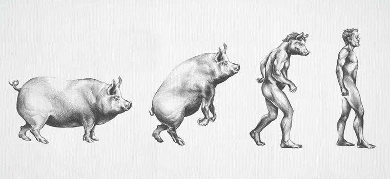 La théorie de l'évolution revisitée par 25 publicités